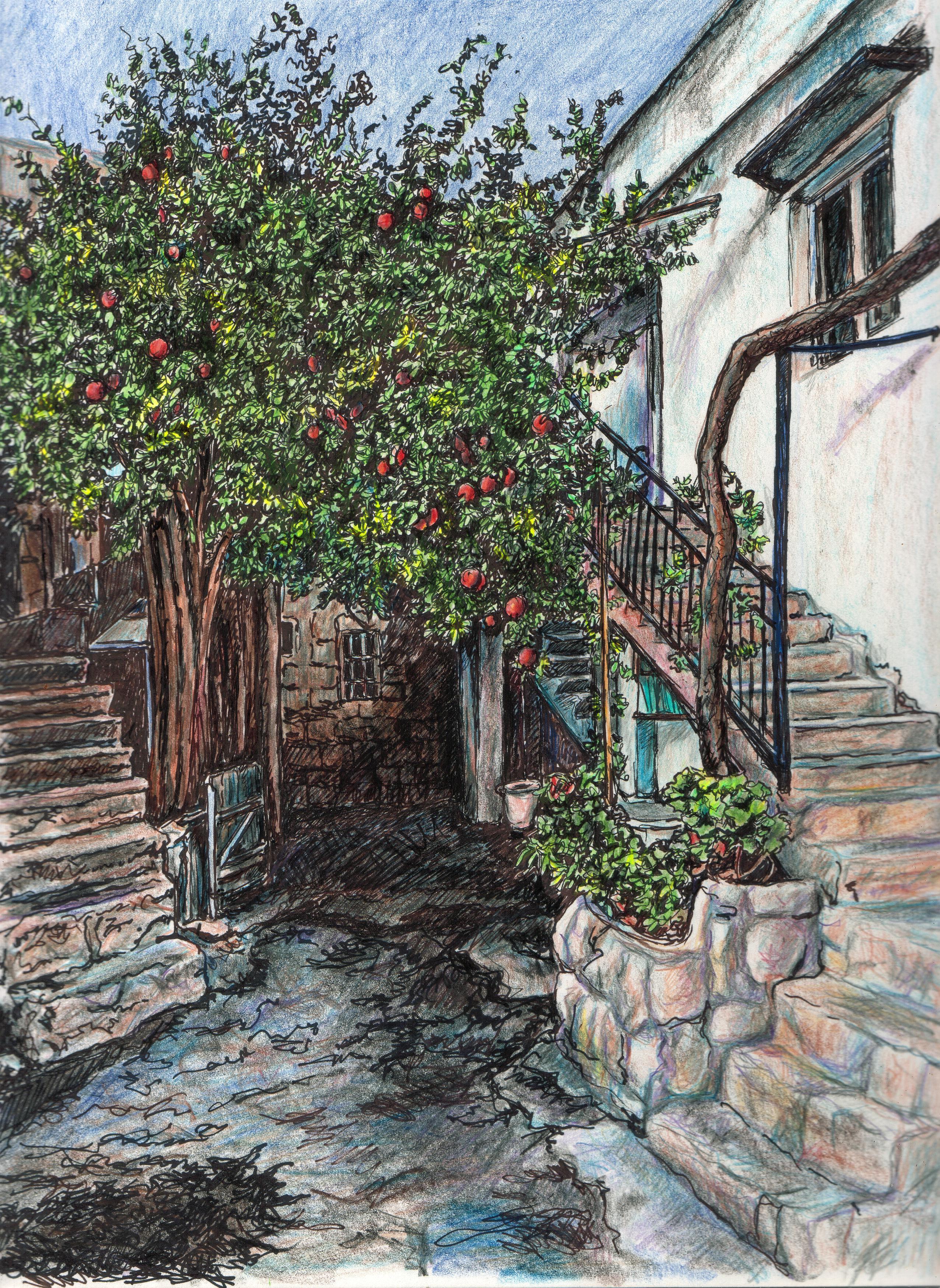 Pomegranate tree in Peki'in