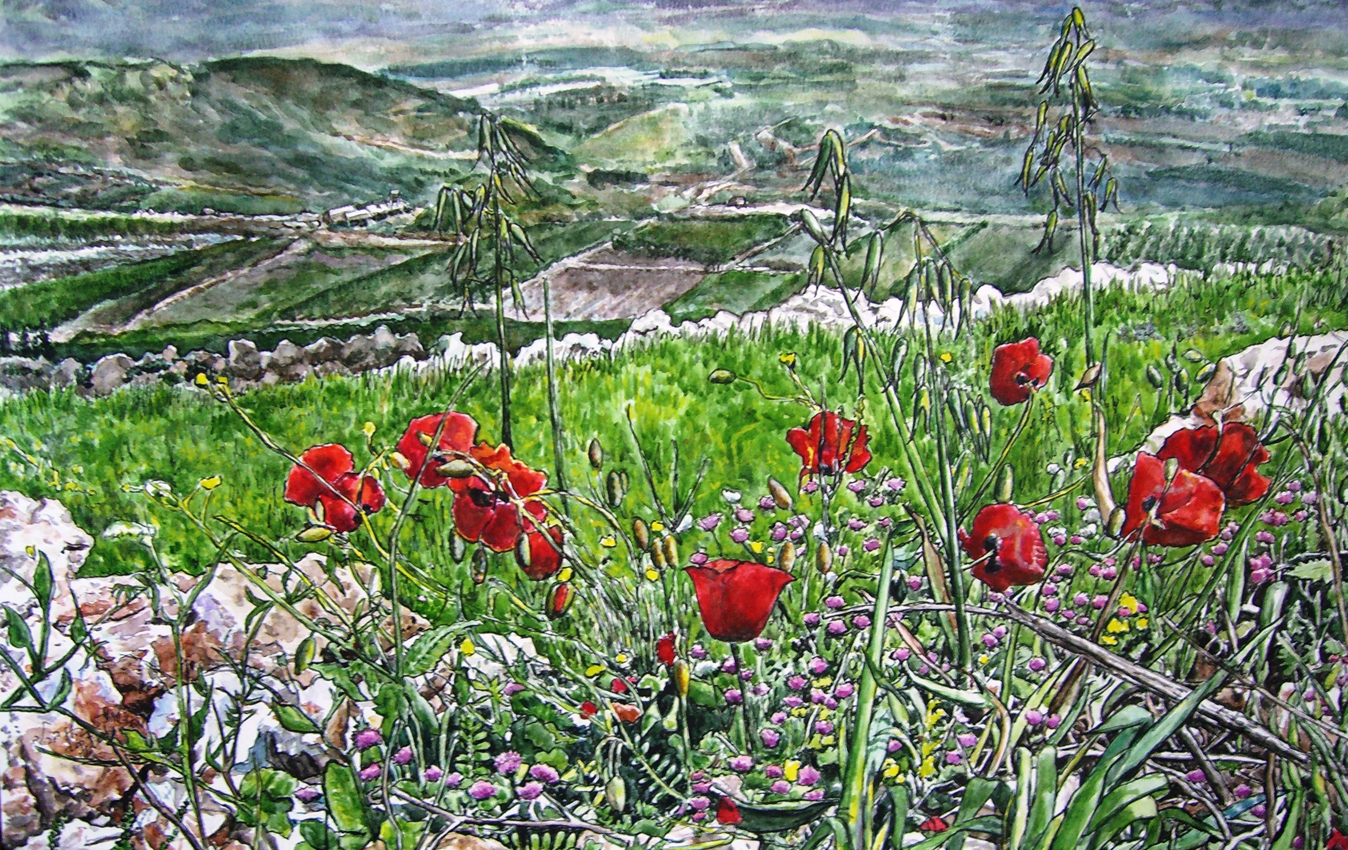 Poppies in Metulla