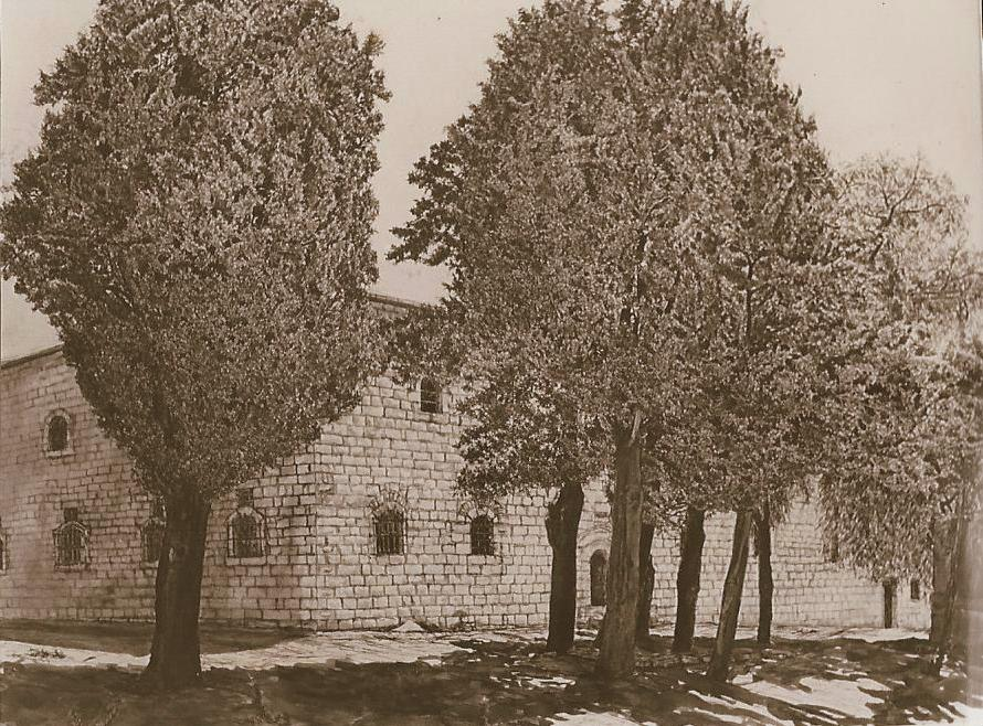Trees in Armenian Quarter