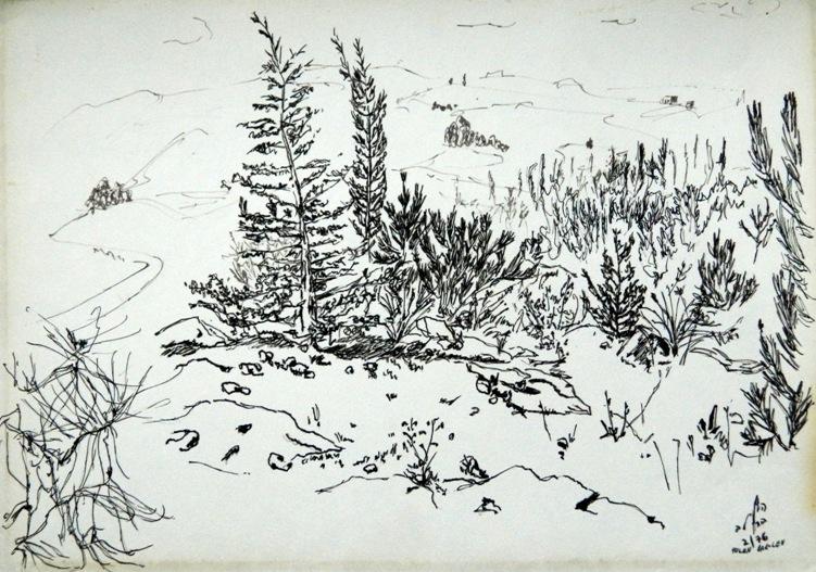 Eshtaol forest