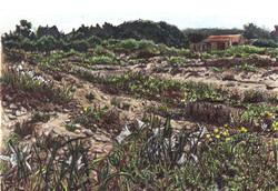 Sand Lilies, Nahal Alexander