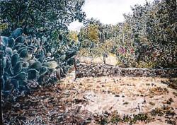 Sabras in Ein Karem
