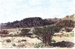 View of Timna