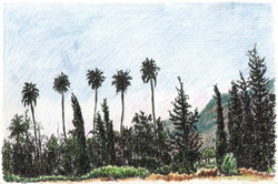 Road to Tiberias with date palms