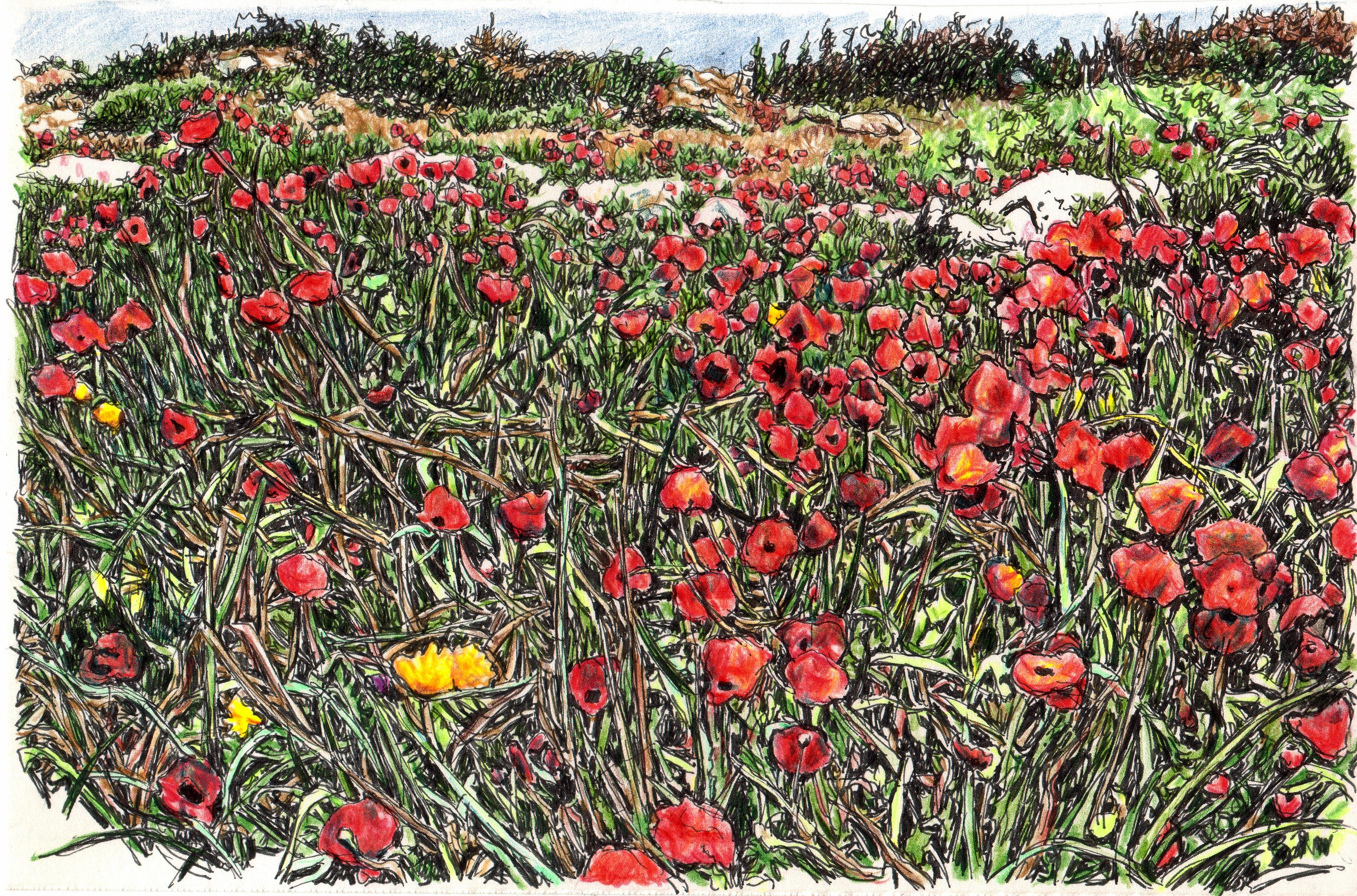 Poppies, Nahal Alexander