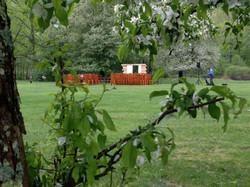Apple Tree Views