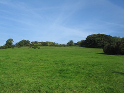 Grove Farm in the summer