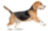 Tulsa Humane Society, Tulsa OK Dog Adopt