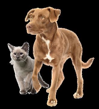 Tulsa Humane Society, Tulsa Rescue, Okla
