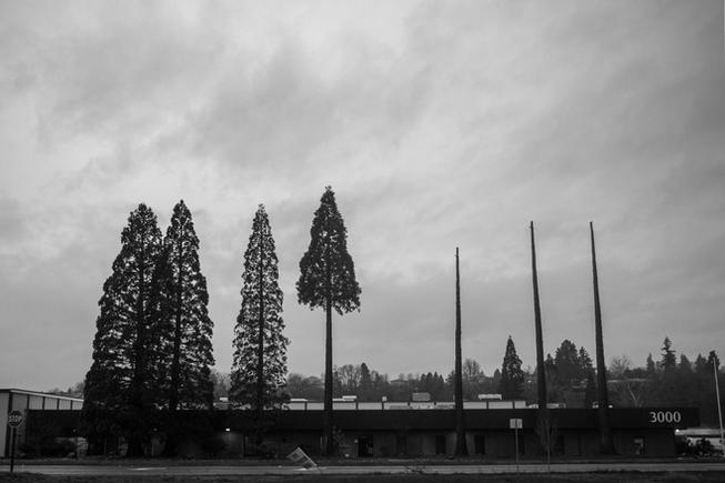 Trees in Vancouver (2019)