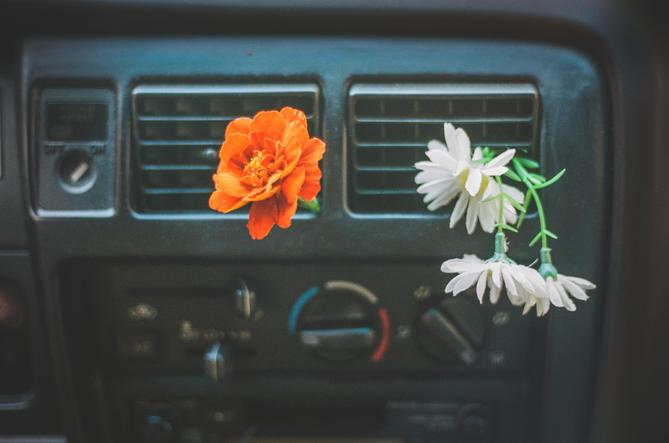 Car Flowers (2019)
