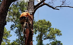 """<img src=""""KatyFenceRepairs.jpeg"""" alt=""""cutting branches on large tree in Spring TX"""">"""
