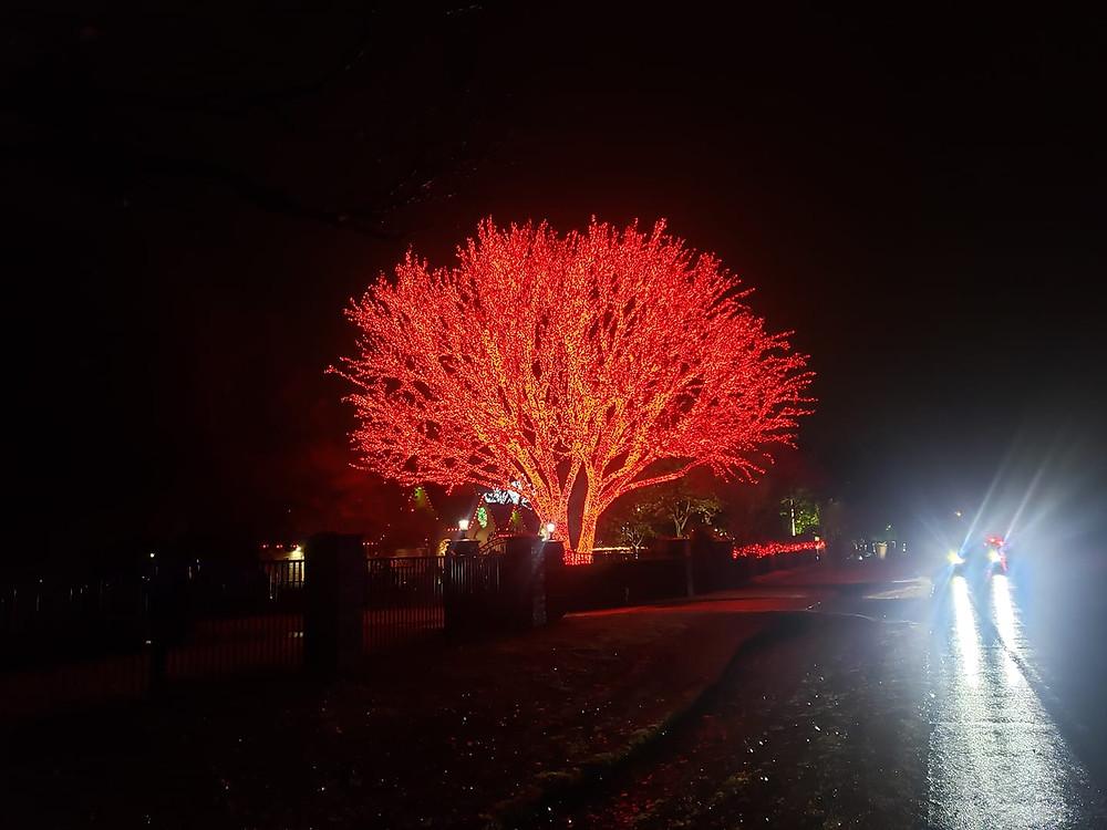 """<img src=""""Katy Christmas lights.png"""" alt=""""Christmas Light installation Katy"""">"""