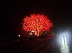"<img src=""Katy Christmas tree.png"" alt=""fire engine red Christmas tree"">"