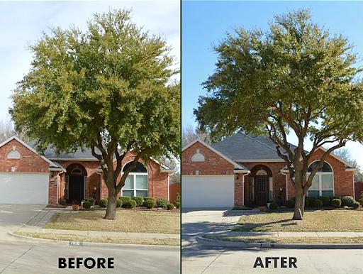 "<img src=""tree pruning spring tx.png"" alt=""tree pruning oak tree in front yard"">"