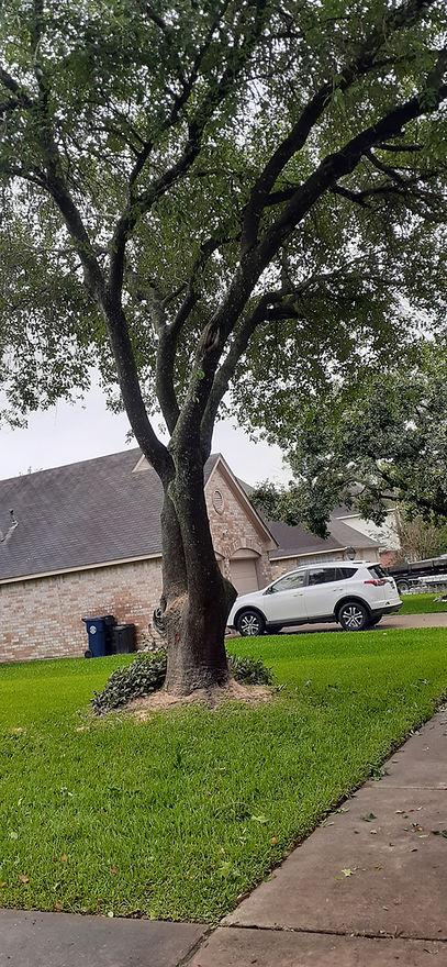 "<img src=""treeservice.jpeg"" alt="" tree trimming on Katy TX property"">"