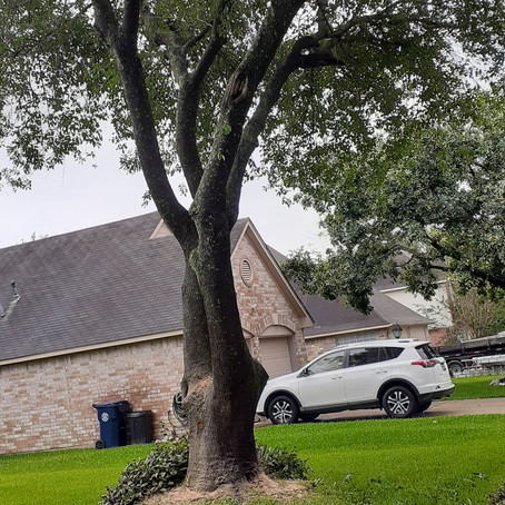 What  To Know About Tree Trimming
