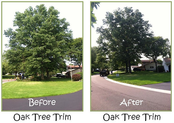 """<img src=""""tree trimming.png"""" alt=""""before and after trimming an oak tree in Spring TX"""">"""