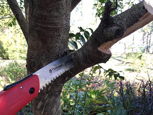 "<img src=""tree service.png"" alt=""Katy tree service cutting a branch"">"