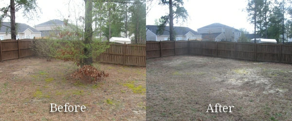 """<img src=""""tree removal.png"""" alt=""""before and after removing a tree in Spring TX"""">"""