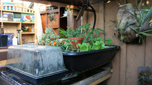Starting Up Your Aquaponics System