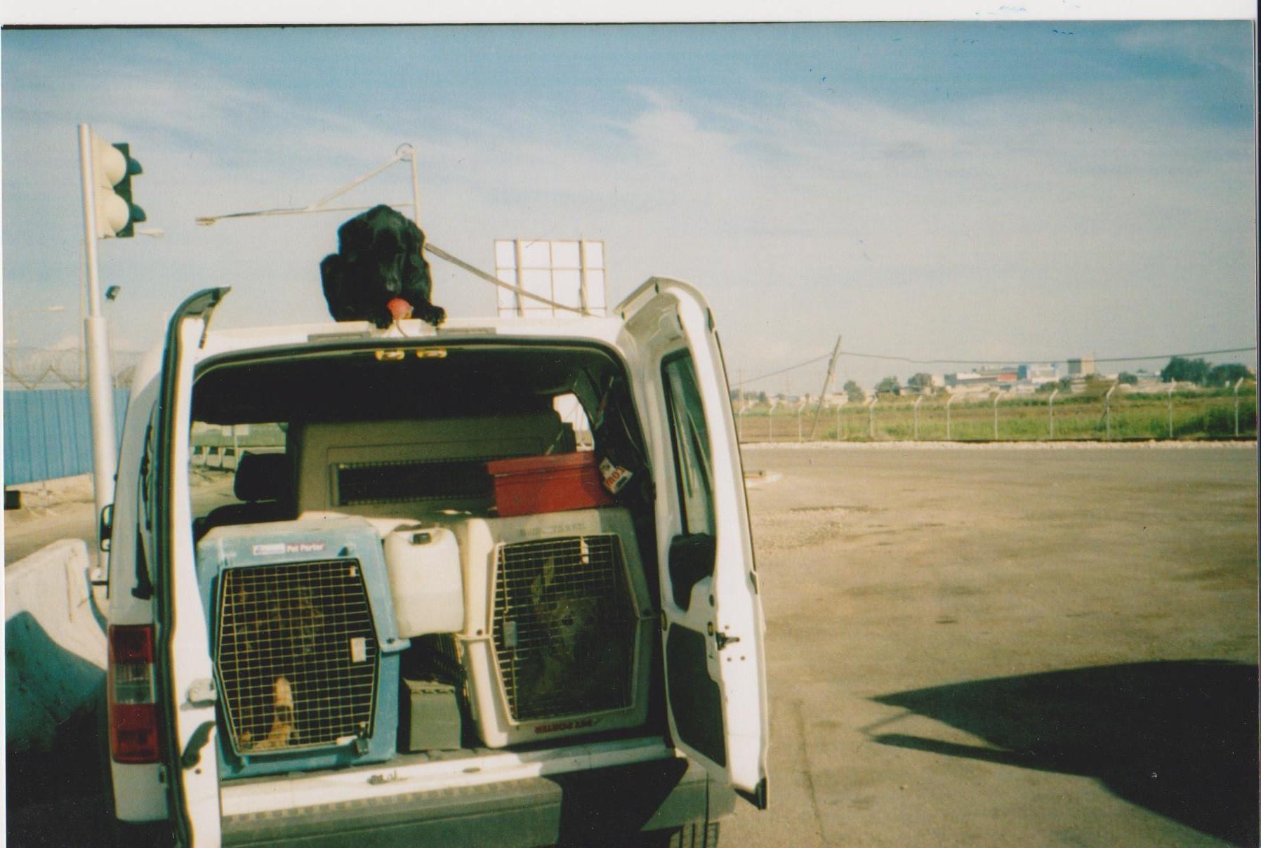 собаки 001