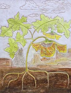 Flowering Acanthus