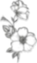 BB Flower.png