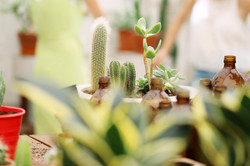 Plant Sale Guide 2011