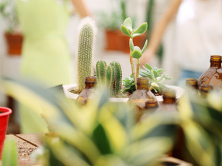 How Houseplants Improve Mental Health