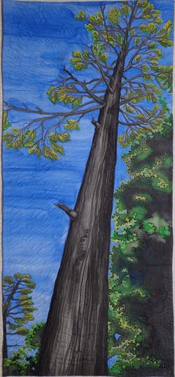 Giant Hemlock