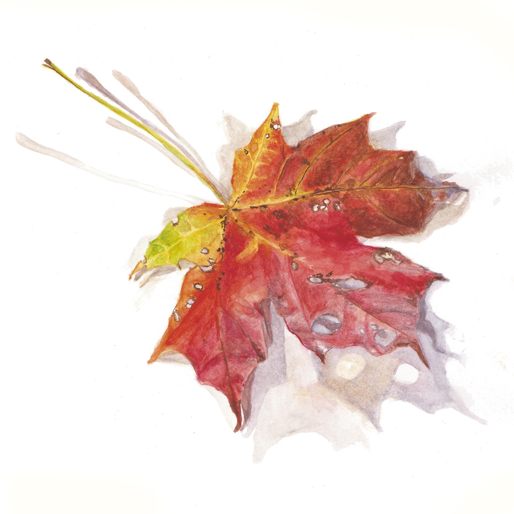 AG leaf1
