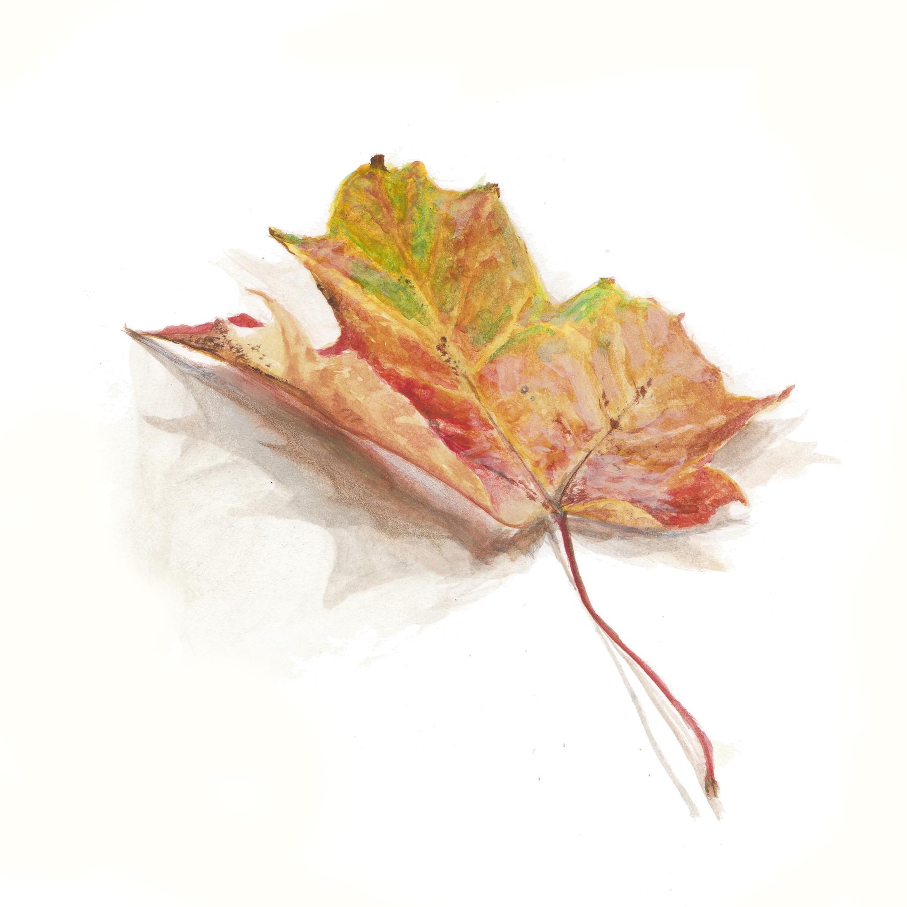 AG leaf3