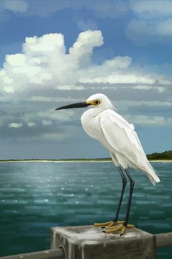 Floridabird