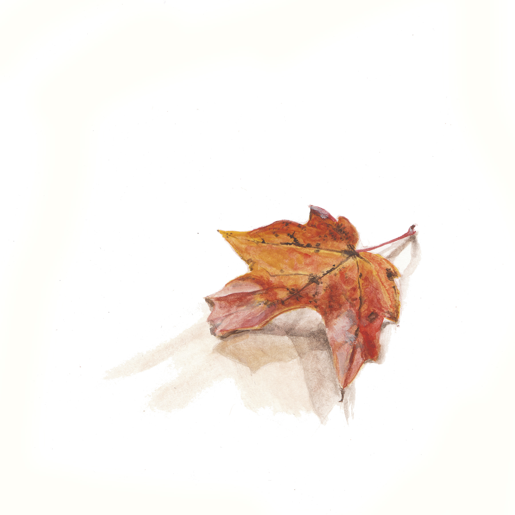 AG leaf2