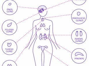 WHAT YOU NEED TO KNOW ABOUT HOW YOUR THYROID WORKS