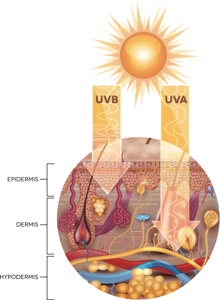 UV rays and the layers of the skin