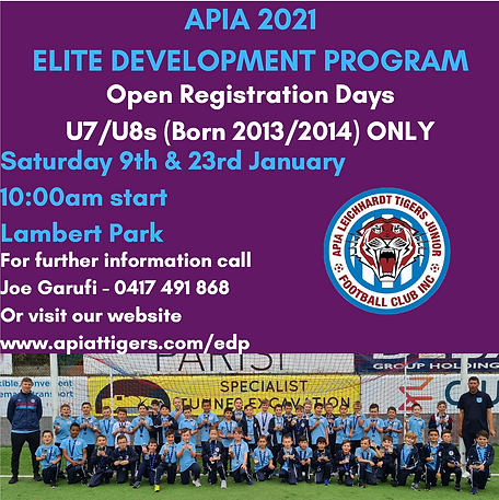 apia flyer.PNG