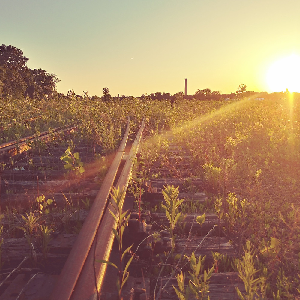 sunset on abandoned railroad tracks with trees sprouting between them