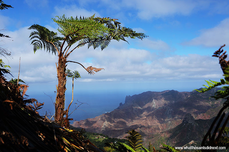 Giant Tree Fern on top of Diana's Peak, looking down into Sandy Bay.