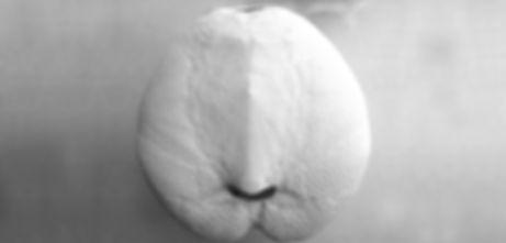 Chœur Tac-Til, de Natacha Muslera, Ensemble vocal contemporain non voyants, composition tactile en temps réel, nouvelles technologies, musique contemporaine, électroacoustique, acousmatique, Expériences sensorielles, Ateliers voix