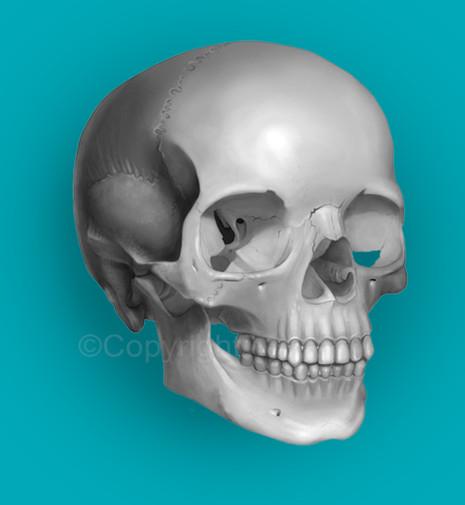 Human Skull, Black and White Tone