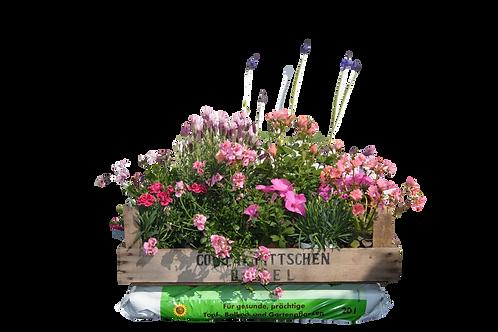Blumen-Kiste (inkl. Erde)