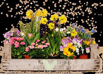 Pot Flowers.png