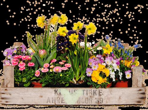 Frühlings-Kiste