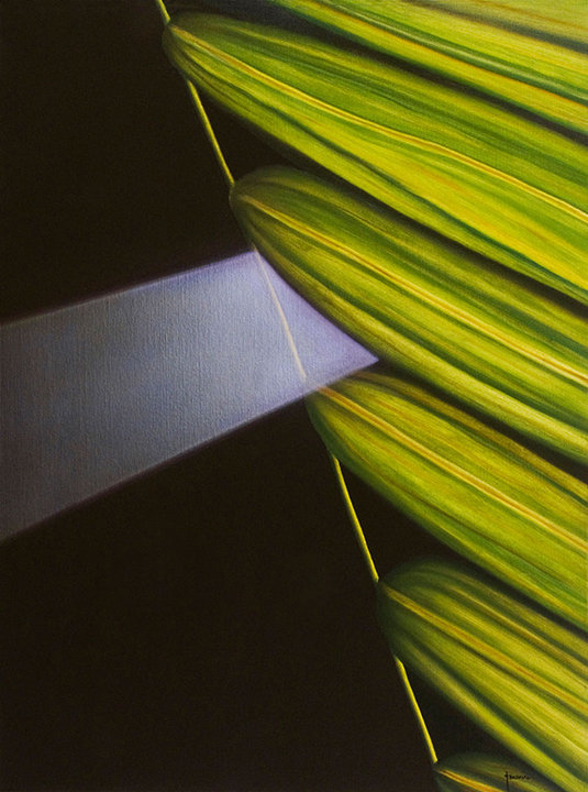 Light beam and palm leaf