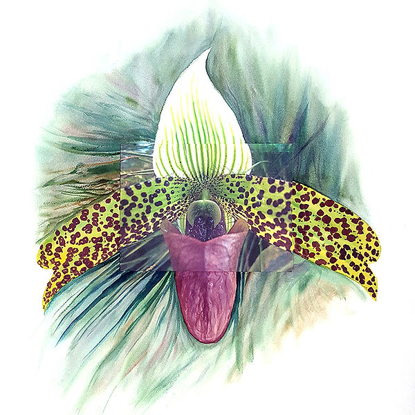 Paphiopedillium, green flower, orchid