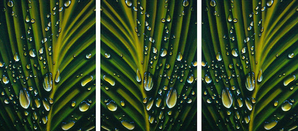 Water droplets and dew on palm leaves