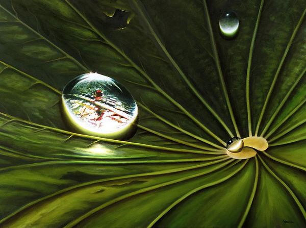 Droplet of water, hoja de loto y gota de agua