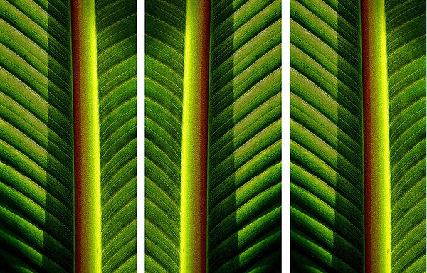Banana leaves, abstraction
